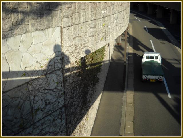 壁に蔦と影