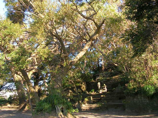 東福寺城跡