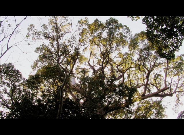 森を見上げる