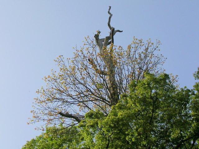 裸木と新芽