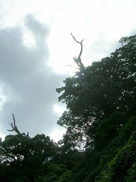 城山の裸木