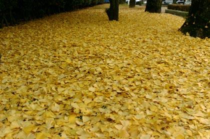 鹿児島市ザビエル公園の秋