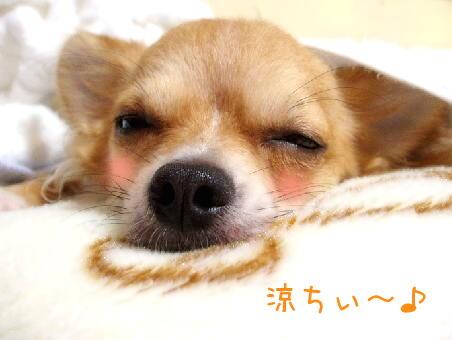今夜はぐっすり眠れそぅでしゅ♪
