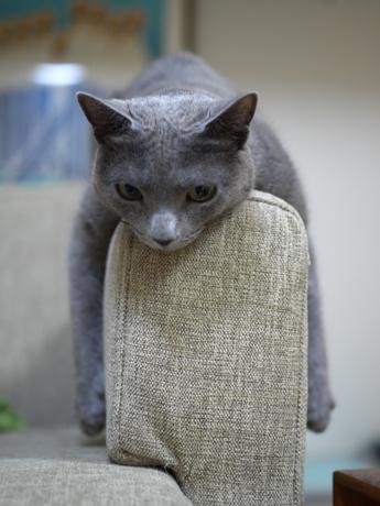 ミモザのソファー