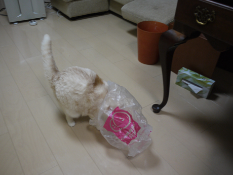 カシミヤとビニール袋1