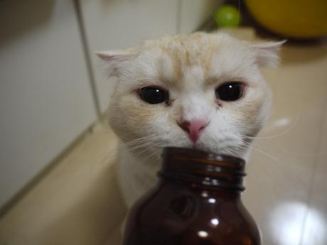 カシミヤと瓶1