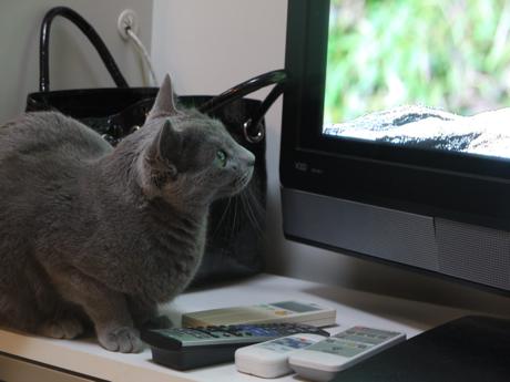 ミモザとテレビ