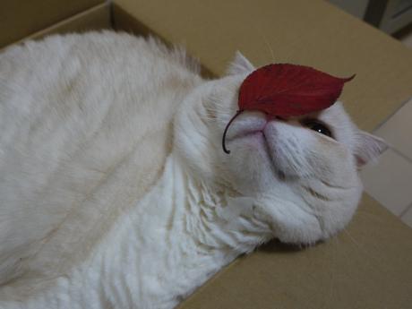 カシミヤと葉っぱ