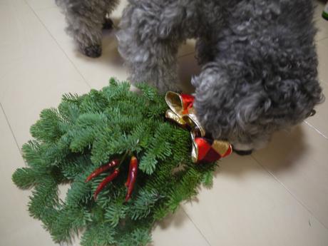 クリスマスリースとのっこ