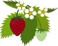 i_strawberry02_convert_20090128135413[1] (2)