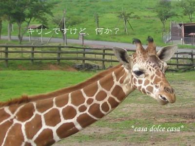 giraffa_convert_20090809000133[1] (2)