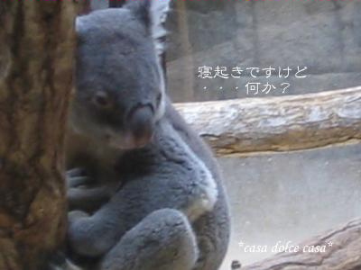 koala_convert_20090926063755[1] (2)