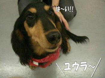 16satooya4image2.jpg