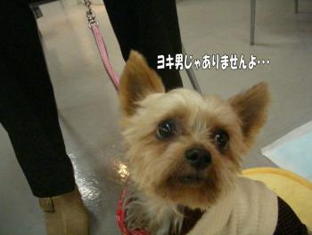16satooya7image5.jpg
