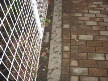 DSCN55112008-12-23eve.jpg