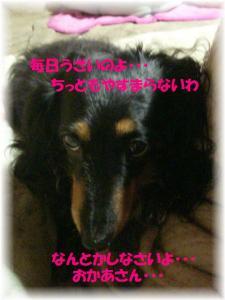 DSCN81512009-06-21eve.jpg