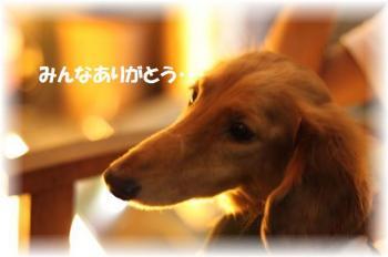 IMG_0004_convert_20090731194009.jpg