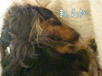berutoraiaru3image3.jpg