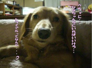 berutoraiaru4image4.jpg
