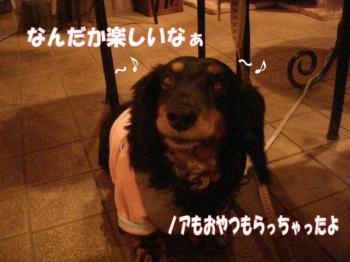 doo5image4.jpg