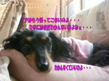 hinahiza3image3.jpg