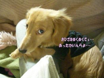 hinaohizaimage.jpg