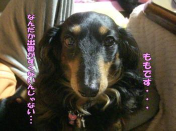 momo3image2.jpg