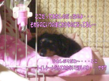 momo5image4.jpg