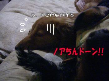 noadakko2image.jpg