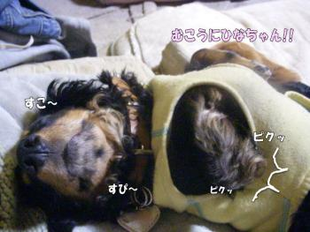 noadakko4image.jpg