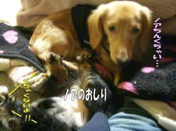 noahiza2image1.jpg