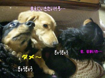 noahiza4image3.jpg