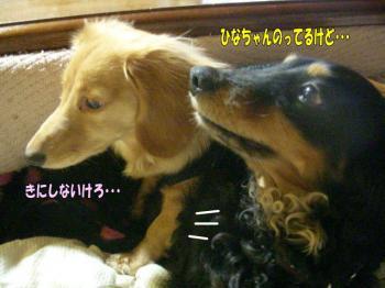 noahiza5image4.jpg