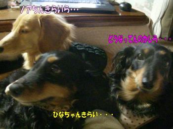 noahiza8image7.jpg