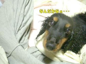 noasyawa2image2.jpg