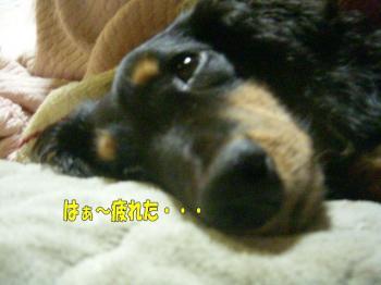 noasyawa4image3.jpg