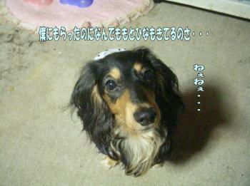 ranato3image2.jpg