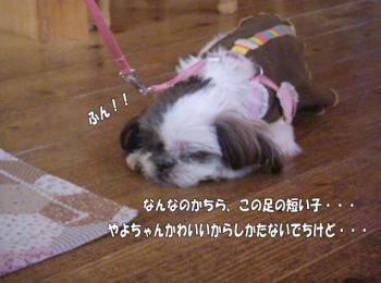 ranowakare5image4.jpg