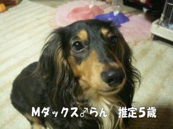 rantaihen5image3.jpg