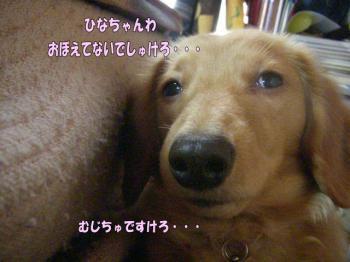 rantaihen6image4.jpg