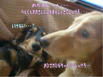 tanhaisetu3-2image1.jpg