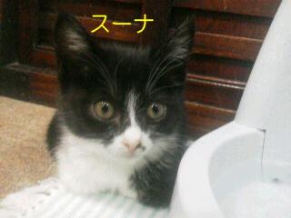 19-9_20111120000523.jpg