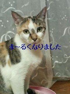 mika_20111102235558.jpg