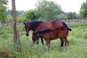 051935お馬の親子
