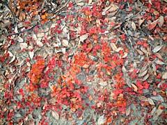 地面には赤い草が…