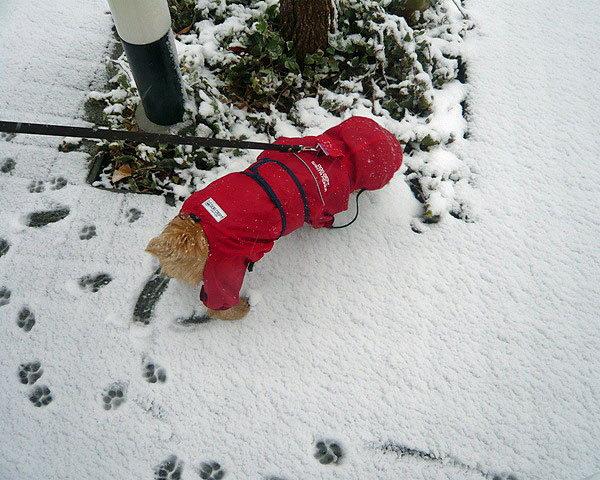 120229雪のお散歩