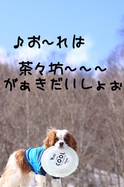 IMG_2242g.jpg