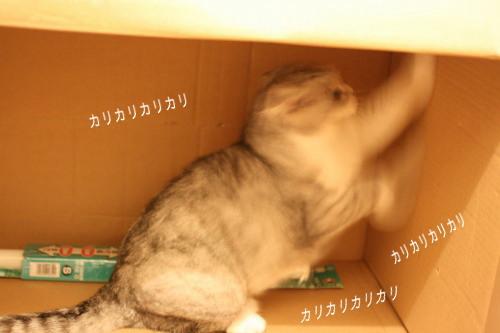 20090707-7.jpg