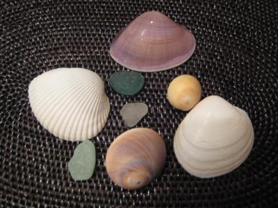 銚子の貝殻