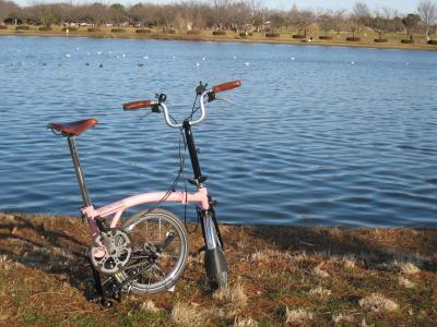 水辺の桃ちゃん